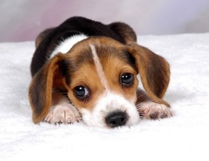 cute_puppy_alpine pet grooming